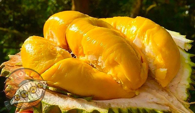 Cách chọn sầu riêng ngon là cơm sầu có màu vàng ươm múi dày